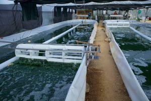 Les 2 bassins au premier plan. Une roue à aube en mouvement. L'espace de récolte et de transformation au dernier plan.